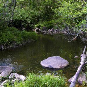 Kalni nature trial