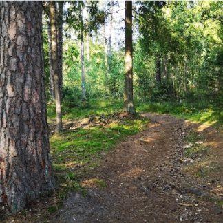 Kurtuvėnai trail 3