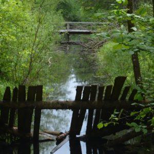Pauolios miško keliu