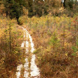 Trako miško gamtinis pažintinis takas 2