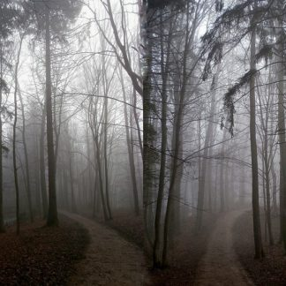 Vidzgirio ekologiniu keliu 6