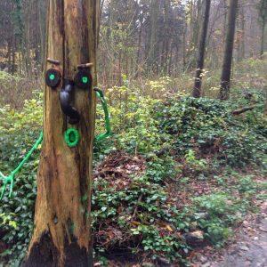 Harmonia forests hike